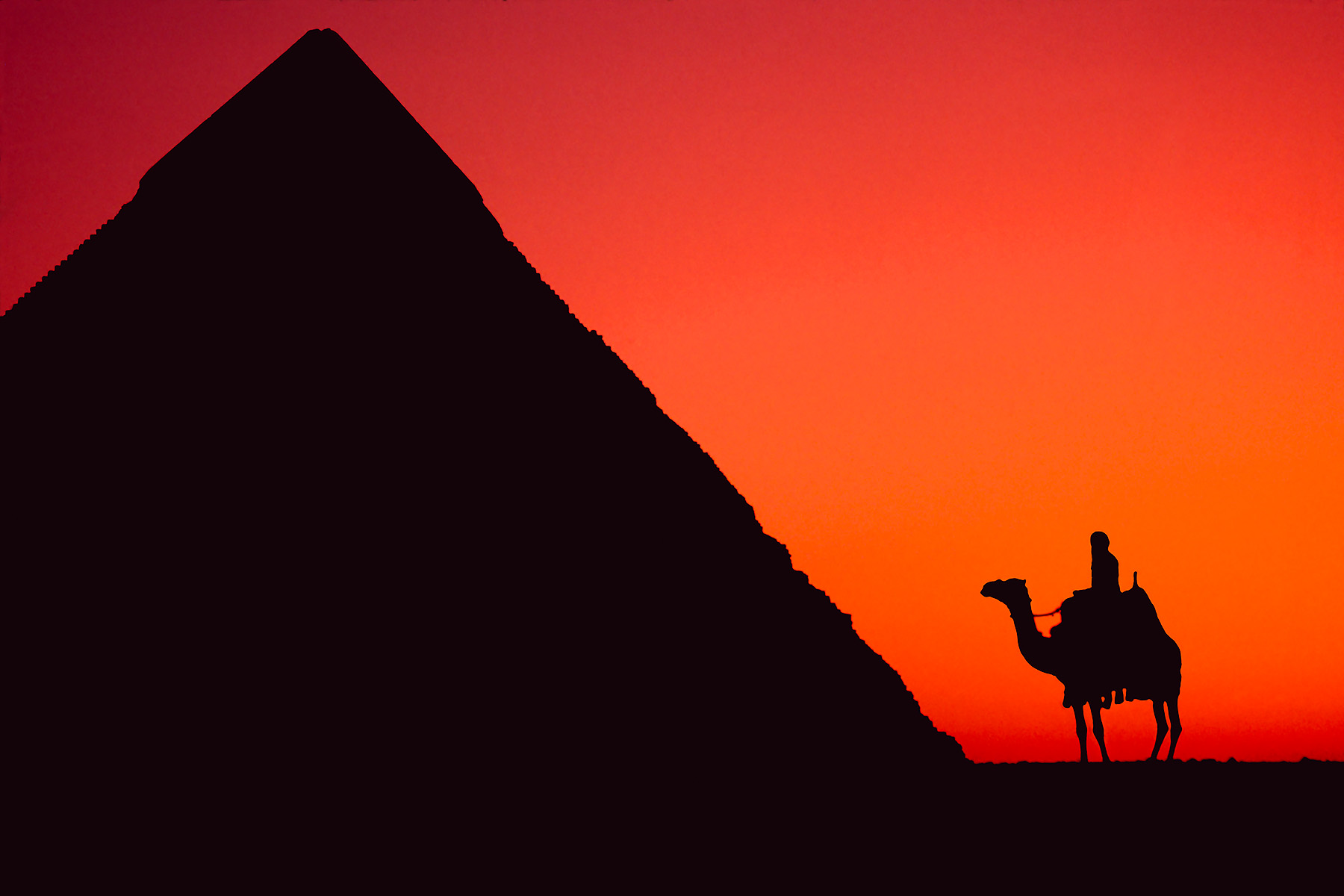 D35 0131Camel and Pyramid